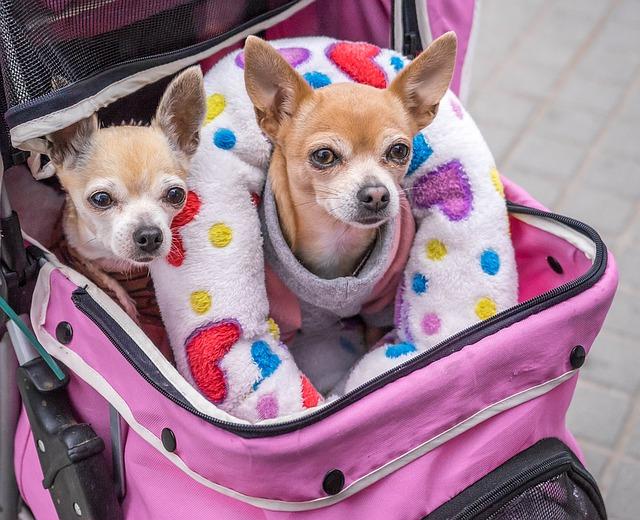 přeprava psů.jpg